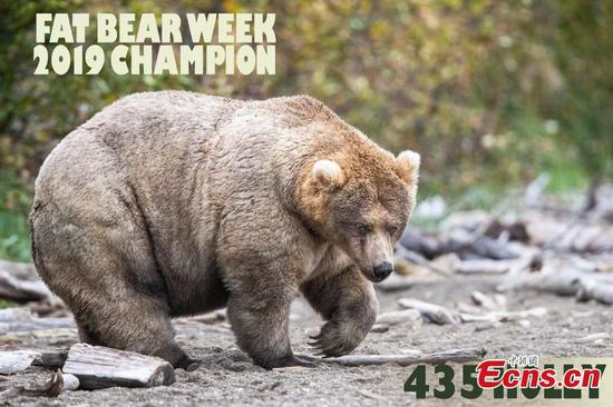 Meet the winner of this year's Fat Bear Week in Alaska