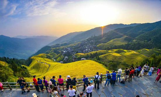 Golden terraced field landscape attracts tourists