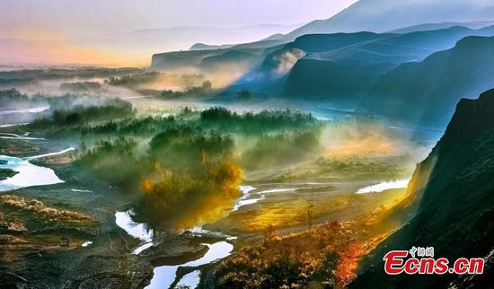 Picturesque forest in NW China county
