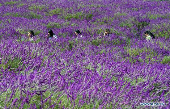 Scenery of flowers in Qujing, SW China's Yunnan