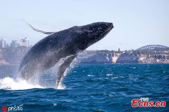 Nations' whaling reversal may imperil global efforts
