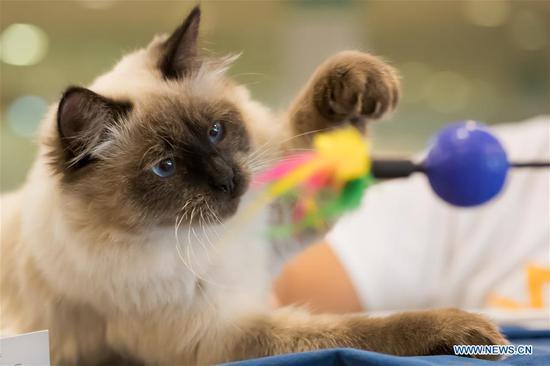 在匈牙利布达佩斯举行的国际猫展