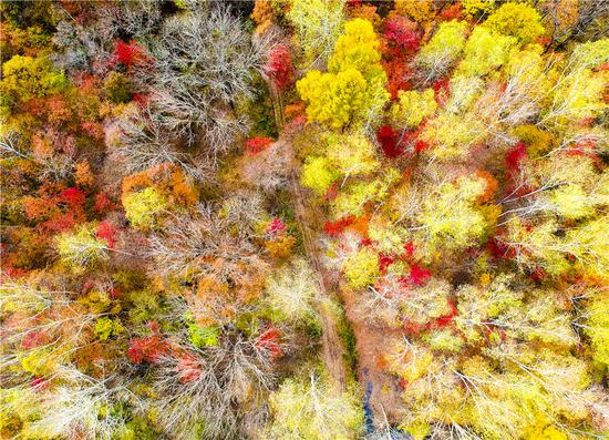 Photographers capture dazzling color in Northeast China