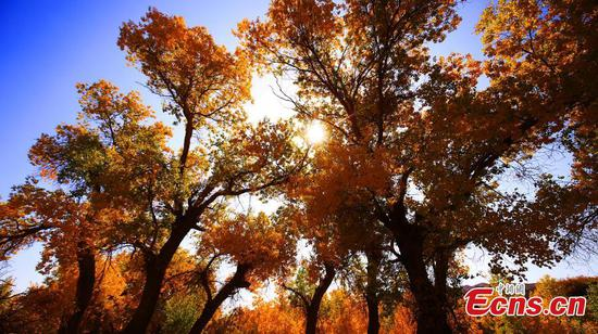 Spectacular autumn colours in Xinjiang