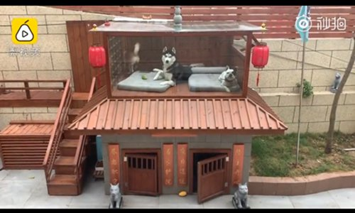 The two-floor villa for dogs. (Photo/Screenshot of video posted by Pear Video)