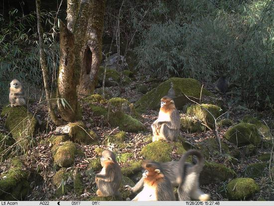 China uses AI systems for wildlife protection