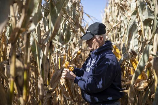 U.S. farmer hopes trade with China 'coming back quickly' amid harvest season