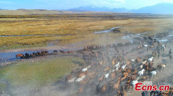 Beautiful scenery of thousand-year-old Shandan horse ranch in Gansu