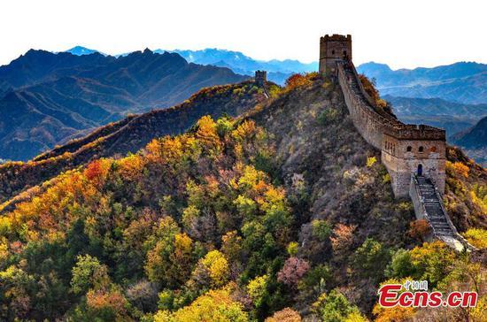 金山岭长城装饰着秋色