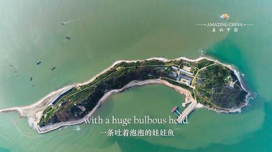 Amazing China Episode 20: The Bubbling Chinese Giant Salamander
