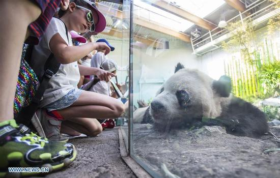 eople look at a giant panda at Panda Passage of the Calgary Zoo in Calgary, Canada, on July 16, 2018. (Xinhua/Zou Zheng)