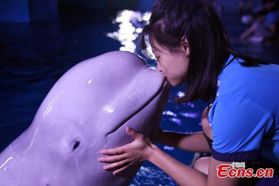 White whales bring stunning show to Guangzhou