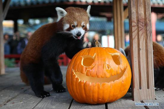 Halloween celebrated across world
