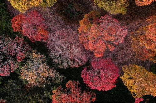 Autumn turns park into colorful palette