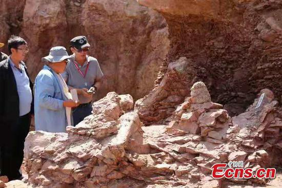 Dinosaur fossils found again in Yongjing County