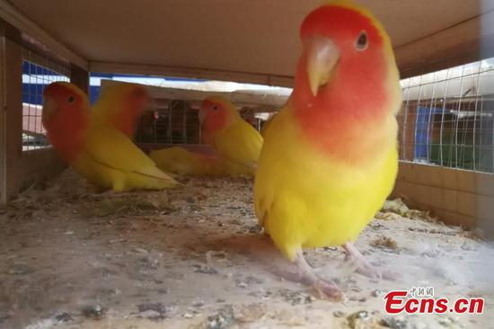 Border police seize hundreds of parrots under protection