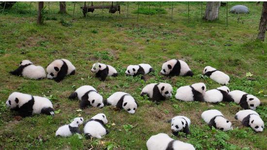 Amazing China: We all love pandas