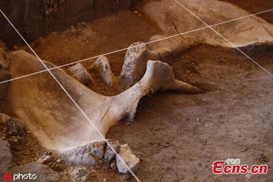'Mammoth traps' dated around 15,000 years old discovered in Mexico