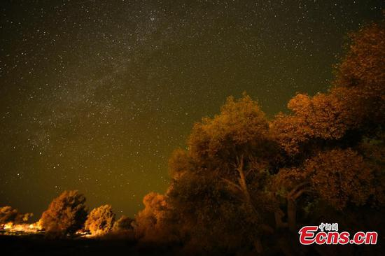 Special charm of desert forest on starry night