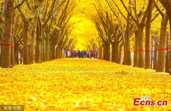 Tourists flock to see blanket of foliage