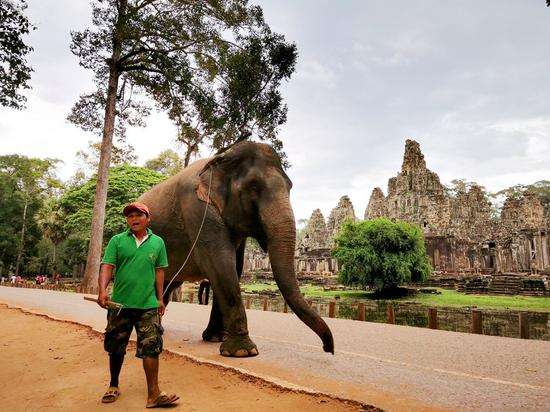 Elephant rides at Cambodia's famed Angkor to be banned from 2020