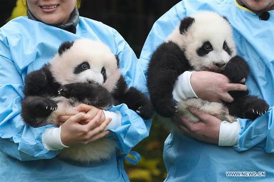 Two giant pandas born in Belgium given official names