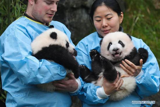 Zookeepers hold the panda twins