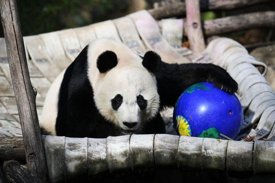 U.S. National Zoo's director hails cooperation with China on giant pandas conservation