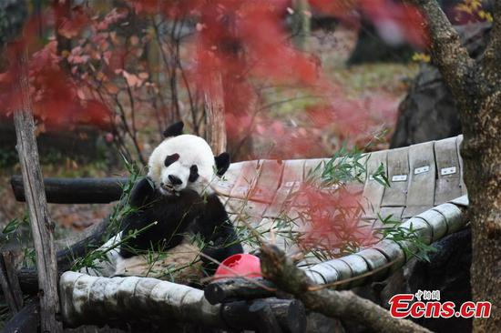 U.S.-born giant panda Bei Bei departs for new life in China