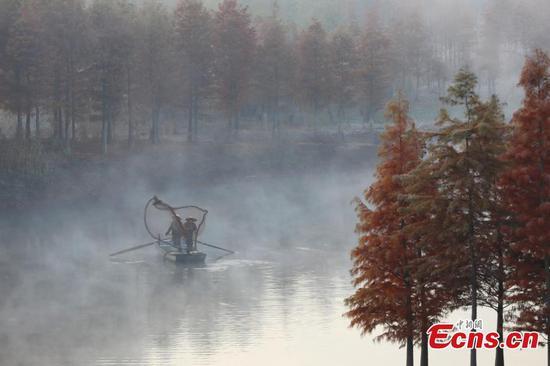 隐藏在雾中的森林的壮丽景色