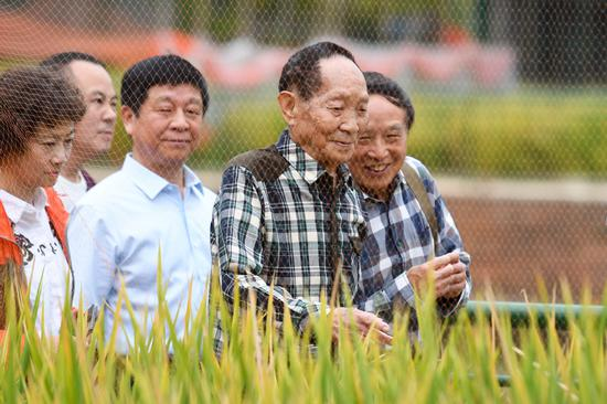 Average output of double-season hybrid rice reaches new high