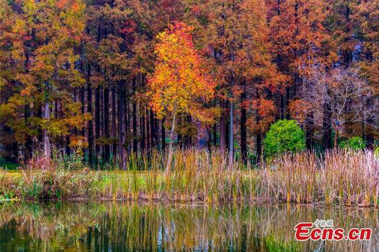 Amazing autumn colors in eastern Jiangsu park