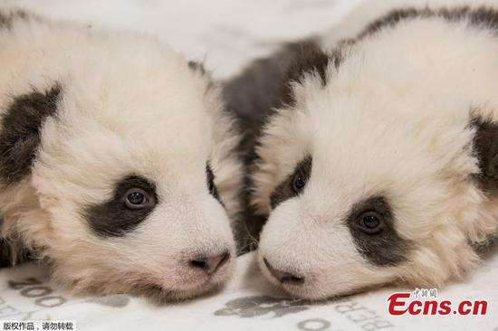 Twice as cute: Berlin zoo releases new photos of panda twins