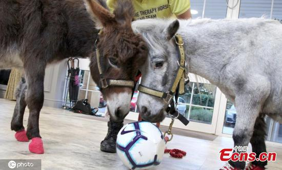 Therapy pony trains donkey as new recruit