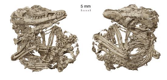 Ancient fossils clarify evolution of mammalian hearing