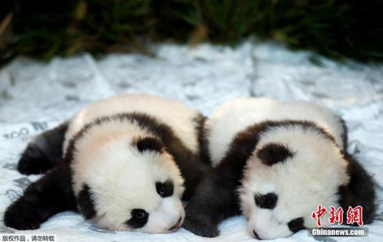 Berlin Zoo reveals names of panda twins