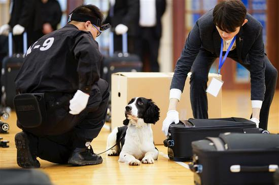 Shanghai hires first stray dog as customs sniffer