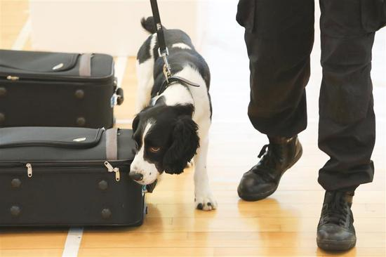Stray dog passes customs tests