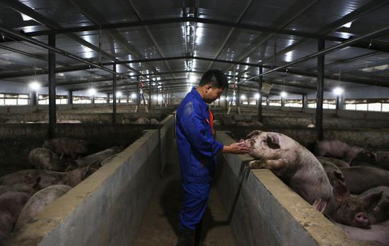 China's pork prices continue to retreat