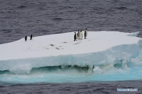 Xuelong 2 comes across polar animals in Southern Ocean