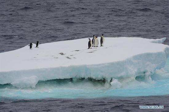 Xuelong 2 comes across polar animals in Southern Ocean