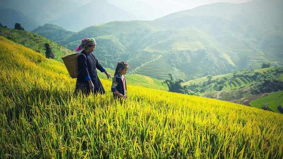 China holds key meeting to outline roadmap for 2020 rural work