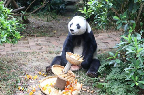 Zoo celebrates birthday for panda returned from Japan