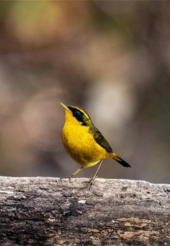 Bird watching in Sanhe village of southwest China's Yunnan
