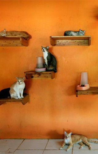 In pics: Cat shelter in Indonesia