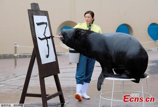 Sea lion shows Chinese calligraphy skills in Japan