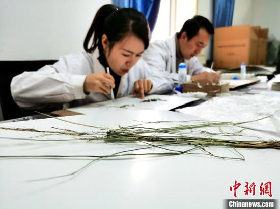 Traditional Chinese medicine culture increasingly prevalent among residents: survey