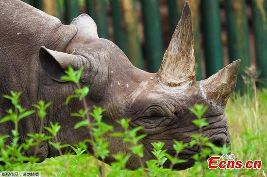 """""""世界上最古老的犀牛""""在坦桑尼亚去世,享年57岁"""