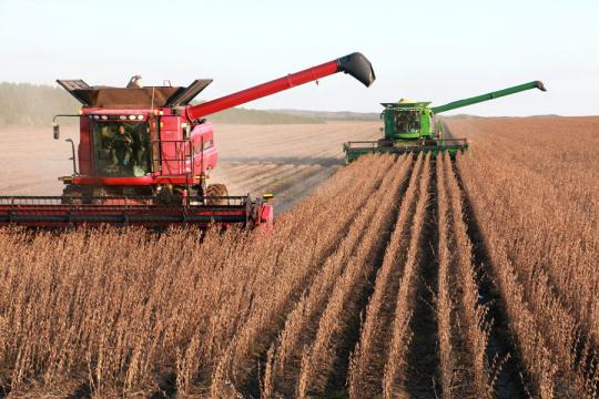 Soybeans are harvested in Heilongjiang province. (Xinhua/LU WENXIANG)