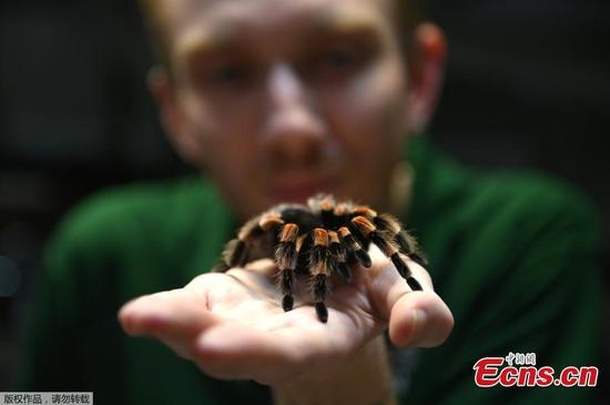 数动物:ZSL伦敦动物园的年度盘点